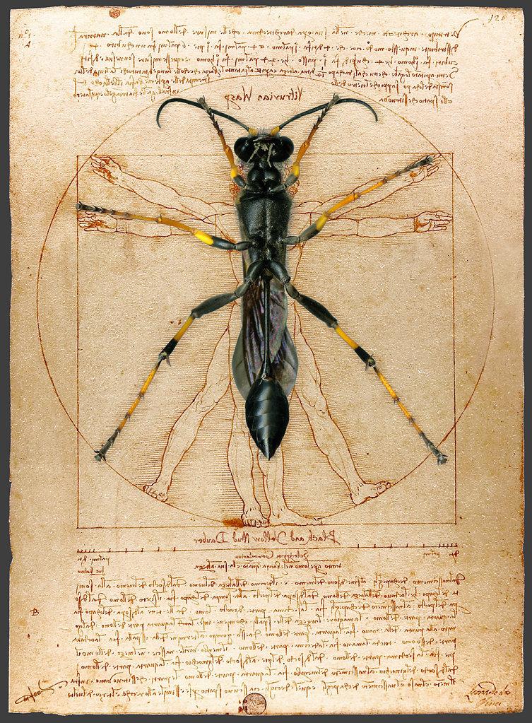 Vitruvian Wasp
